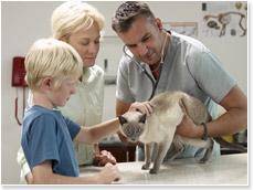 動物病院での治療費未払い